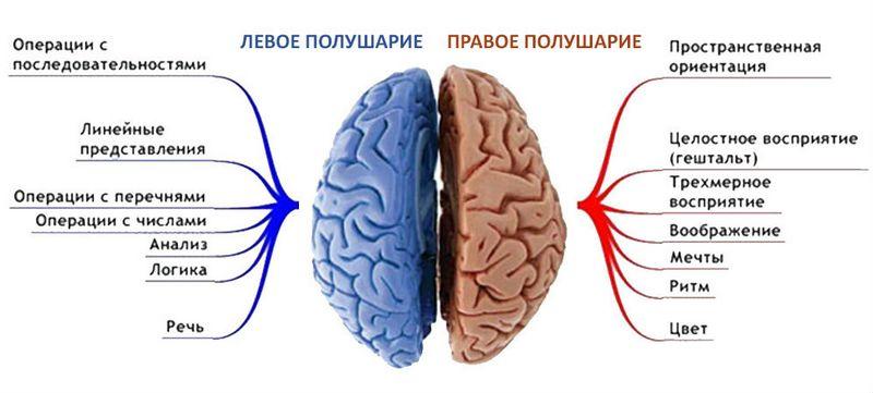 Как наладить связь между правым левым полушарием?