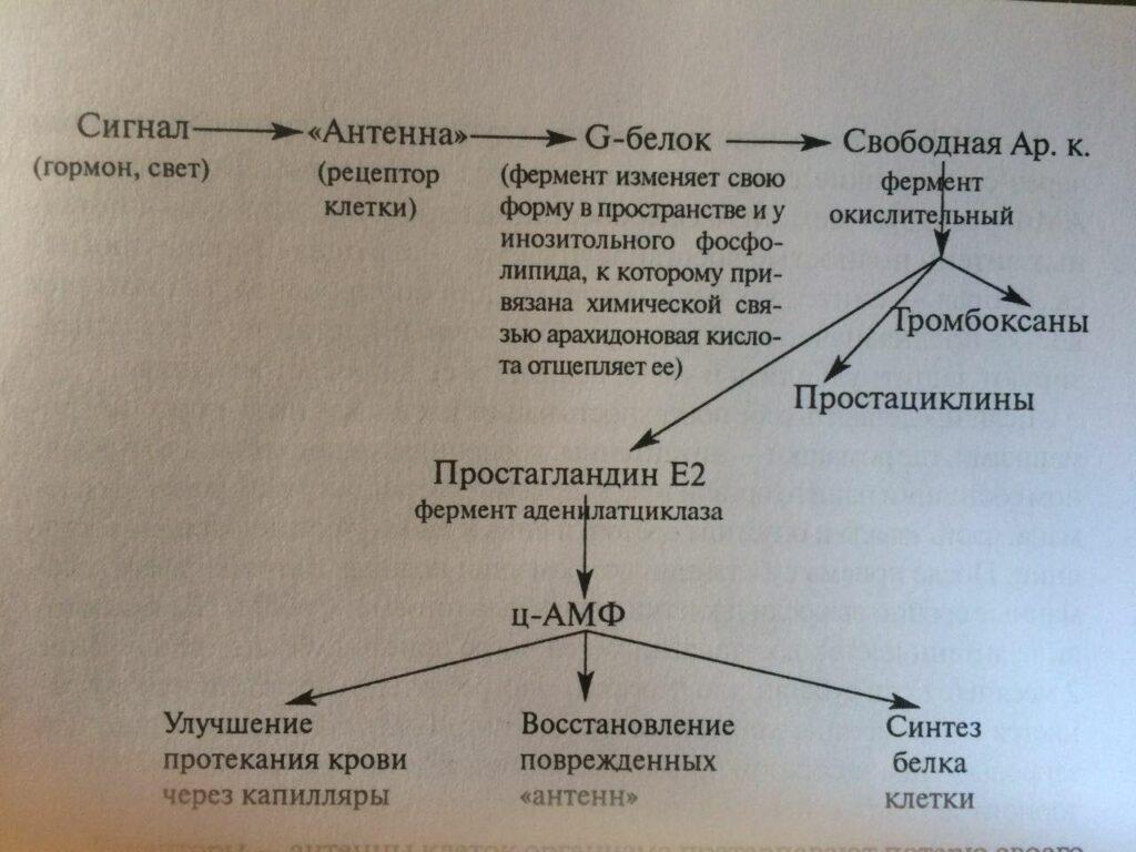 Фото Схема регуляции биосинтеза веществ в клетке