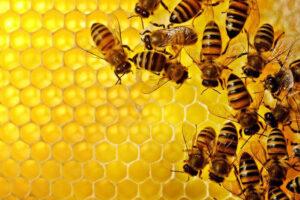 Экология и пчелы.