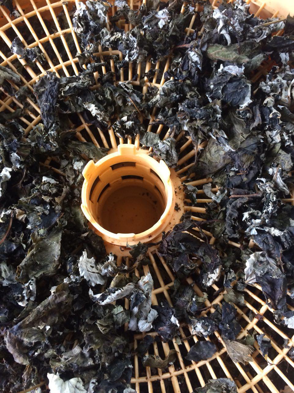 Фото Иван-чай и не только. Заготовка и ферментация.
