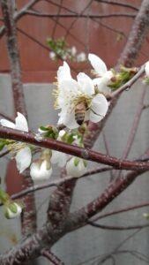 Фото Пчелы из города Оренбург