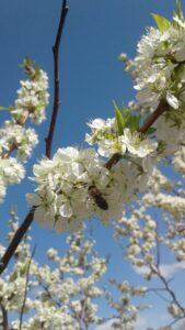 Фото Пчелы из села Григорьевка Оренбуржской области